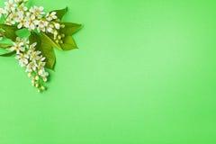 Tak met bloemen en bladeren Stock Afbeeldingen