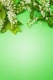 Tak met bloemen en bladeren Royalty-vrije Stock Afbeeldingen