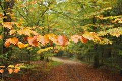 tak met de herfstbladeren in bos Stock Afbeeldingen