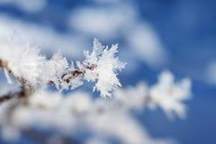 Het uiteinde van de tak met sneeuwvlokken royalty-vrije stock afbeelding