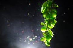 tak met dichte omhooggaand groene van de kersenpruim (Alycha) op een donkere achtergrond met rookeffect De de lentetijd… nam blad Royalty-vrije Stock Foto's