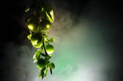 tak met dichte omhooggaand groene van de kersenpruim (Alycha) op een donkere achtergrond met rookeffect De de lentetijd… nam blad Stock Foto's