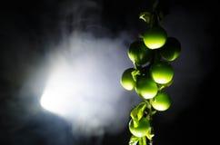 tak met dichte omhooggaand groene van de kersenpruim (Alycha) op een donkere achtergrond met rookeffect De de lentetijd… nam blad Royalty-vrije Stock Afbeelding