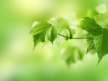 Tak met groene bladeren Stock Foto
