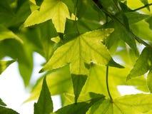 Tak met groene verse bladeren in bos Stock Foto's