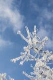 Tak met ijs in zonlicht wordt behandeld dat Stock Fotografie