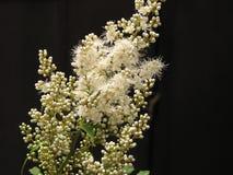 Tak met kleine witte bloemen Royalty-vrije Stock Foto's