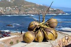 Tak met kokosnoten met mooie oceaan erachter mening Stock Afbeelding