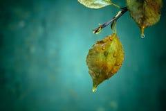 Tak met natte groene bladeren na regen Stock Foto's