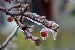Tak met oranje die vruchten in duidelijk ijs na het bevriezen regen worden behandeld royalty-vrije stock foto