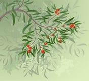 Tak met rode bessen Vector Illustratie