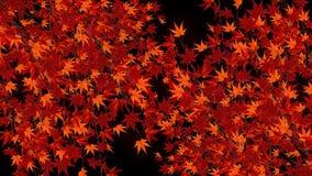 Tak met rode bladeren in het vallen Het traditionele landschap van het de herfstblad van mooie Japanse elegantiestijl Lijnanimati royalty-vrije illustratie