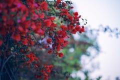 Tak met rode bloemen in de Gotische stijl royalty-vrije stock afbeeldingen