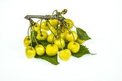 Tak met van gele die kersen op witte achtergrond worden geïsoleerd Royalty-vrije Stock Fotografie