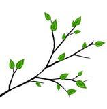 Tak met verse groene bladerenillustratie Royalty-vrije Stock Foto