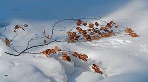 Tak op een sneeuw. Stock Afbeeldingen