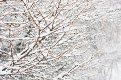 Tak in sneeuw Royalty-vrije Stock Afbeeldingen