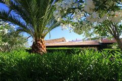 Tak som ses från sommarträdgården i Sardinia Royaltyfria Bilder
