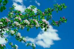 Tak van appelboom stock fotografie