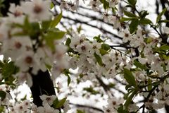 Tak van appelboom royalty-vrije stock afbeelding