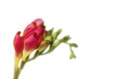 Tak van bloem Royalty-vrije Stock Foto's