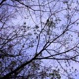 Tak van boom stock fotografie