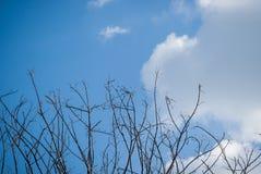 Tak van boom over blauwe hemel Royalty-vrije Stock Afbeeldingen