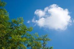 Tak van boom over blauwe hemel Stock Foto