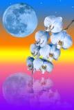 Tak van de blauwe orchideebloem en de grote blauwe maan Royalty-vrije Stock Fotografie