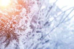 Tak van de close-up de sneeuw behandelde boom vorst, blizzard, sneeuwstorm Zonlicht bij zonsondergang stock foto's