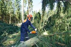 Tak van de houthakkers de scherpe boom in bos Royalty-vrije Stock Afbeeldingen