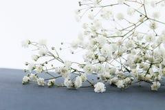Tak van de lentebloemen op lijst stock afbeeldingen