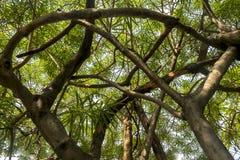 Tak van de oude boom in het bos royalty-vrije stock afbeelding