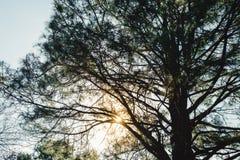 tak van de schaduw de grote boom bij zonsondergang Royalty-vrije Stock Foto's