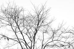 Tak van dode boom, Zwart-wit zwart-wit beeld Stock Foto
