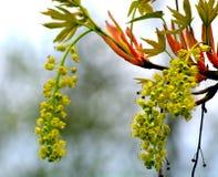 Tak van een bloeiende boom Stock Fotografie