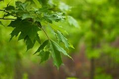 Tak van een boom in het bos royalty-vrije stock foto