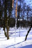 Tak van een boom in ijs stock foto's