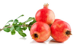 Tak van een granaatboom met vruchten en bladeren Stock Foto