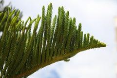 Tak van een naaldboom op een zonnige dag stock afbeeldingen