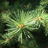 Tak van groene bomen Stock Foto