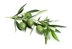 Tak van groene olijven stock fotografie