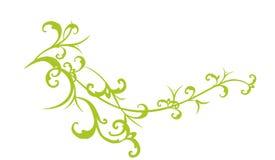 Tak van het Klopje van de Granaatappel van het Oosten Royalty-vrije Stock Afbeeldingen