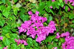 Tak van het tot bloei komen Stock Fotografie