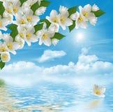 Tak van jasmijnbloemen Stock Foto's