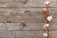 Tak van katoen op houten achtergrond royalty-vrije stock foto