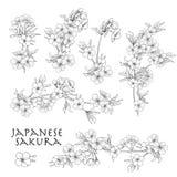 Tak van kersenbloesems, Japanse kers Voorraadlijn vectoril stock illustratie