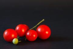 Tak van kleine tomatenclose-up op een zwarte achtergrond Royalty-vrije Stock Afbeeldingen