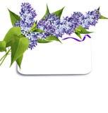 Tak van lilac bloemen Stock Afbeeldingen