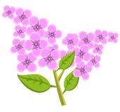 Tak van lilac bloemen Vector illustratie Stock Afbeeldingen